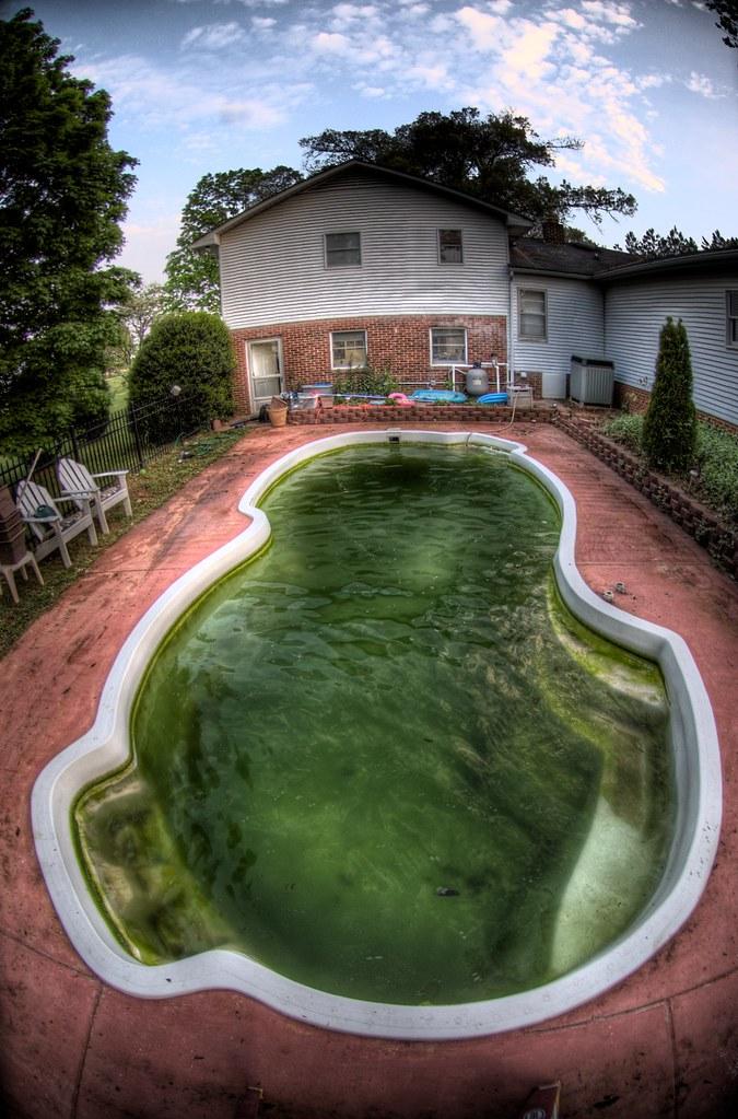 Algae Pool A Photo Of My Backyard Swimming Pool After
