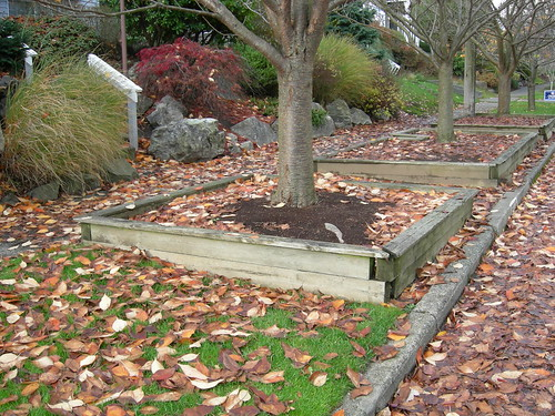 Planter Box Around Tree Cherry Tree Planter Boxes