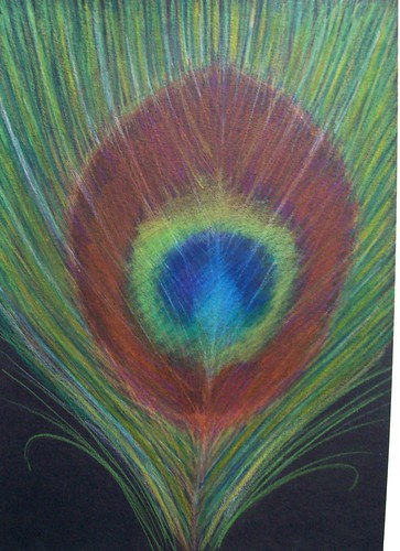 Peacock Feather - Original Coloured Pencil Drawing ...