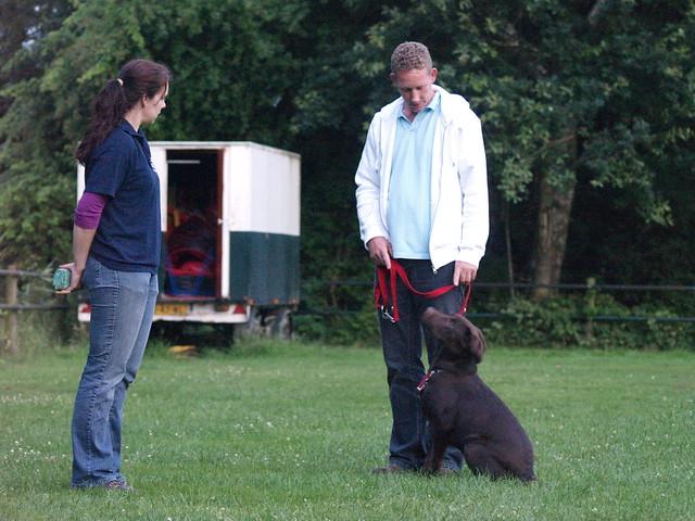 Image Result For Alpha Dog Training