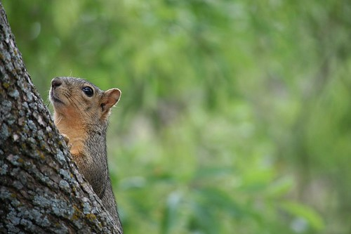 squirrel eyeing me | by Shane Pope