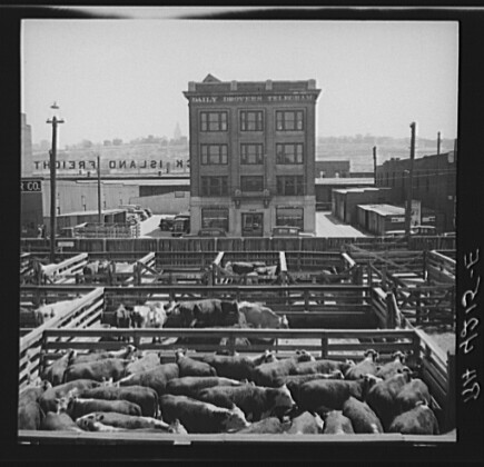 Stockyards, Kansas City, Kansas, 1936 | Stockyards. Kansas ... Negative Sign