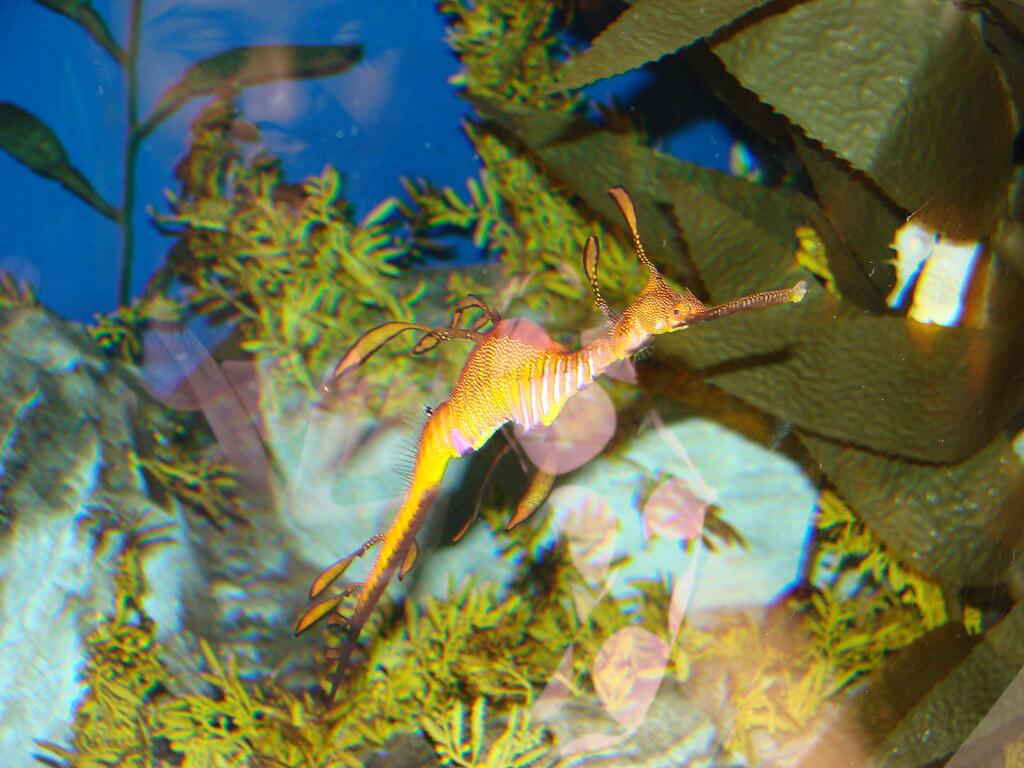 2008 03 16 Camden 017 New Jersey State Aquarium Allie