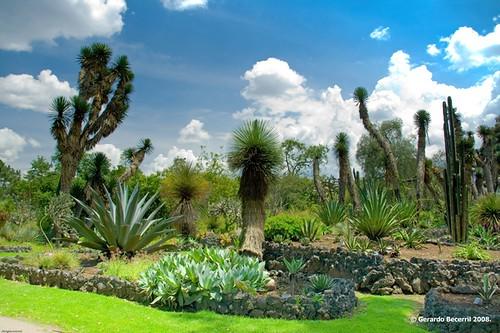 Verde que te quiero verde detalle jard n botanico for Jardin botanico unam 2015