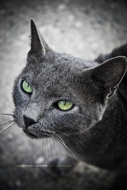 """green eyes cat 
