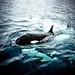 ORCA!...