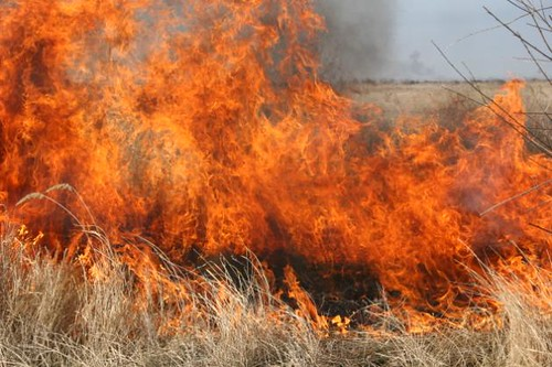 Step fires threaten wetland biodiversity, Kazakhstan | by UNDP in Europe and Central Asia