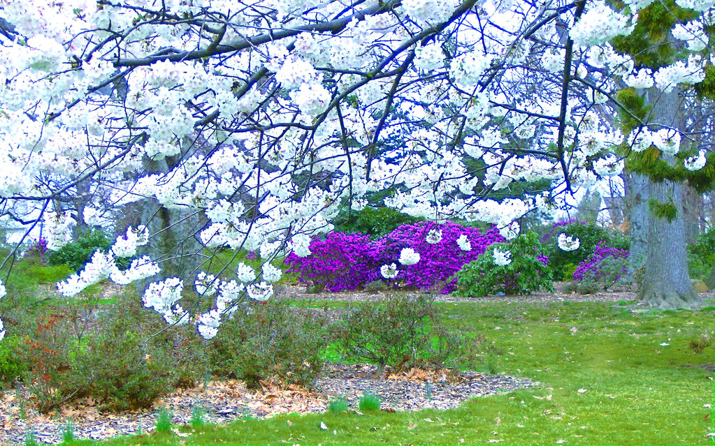 Spring Scene 2 Warinanco Park Elizabeth Nj Spring Has
