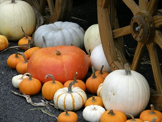 Pick a Pumpkin | by fauxto_digit