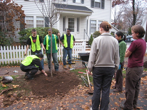 Tree Planting 12 | by WNPR - Connecticut Public Radio