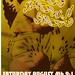 Los Brown Spots show 2007-08-04