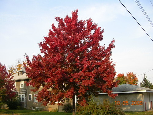 Red Wing Neighborhood Colors | by mwaulk
