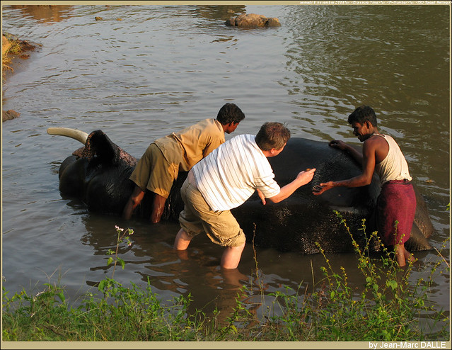 national parks in tamilnadu Mukurthi national park is one of the two sanctuaries of tamil nadu know about mukurthi wildlife sanctuary of india.