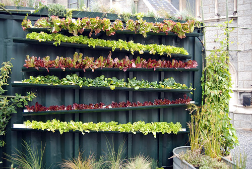 vertical farming | by beelaineo