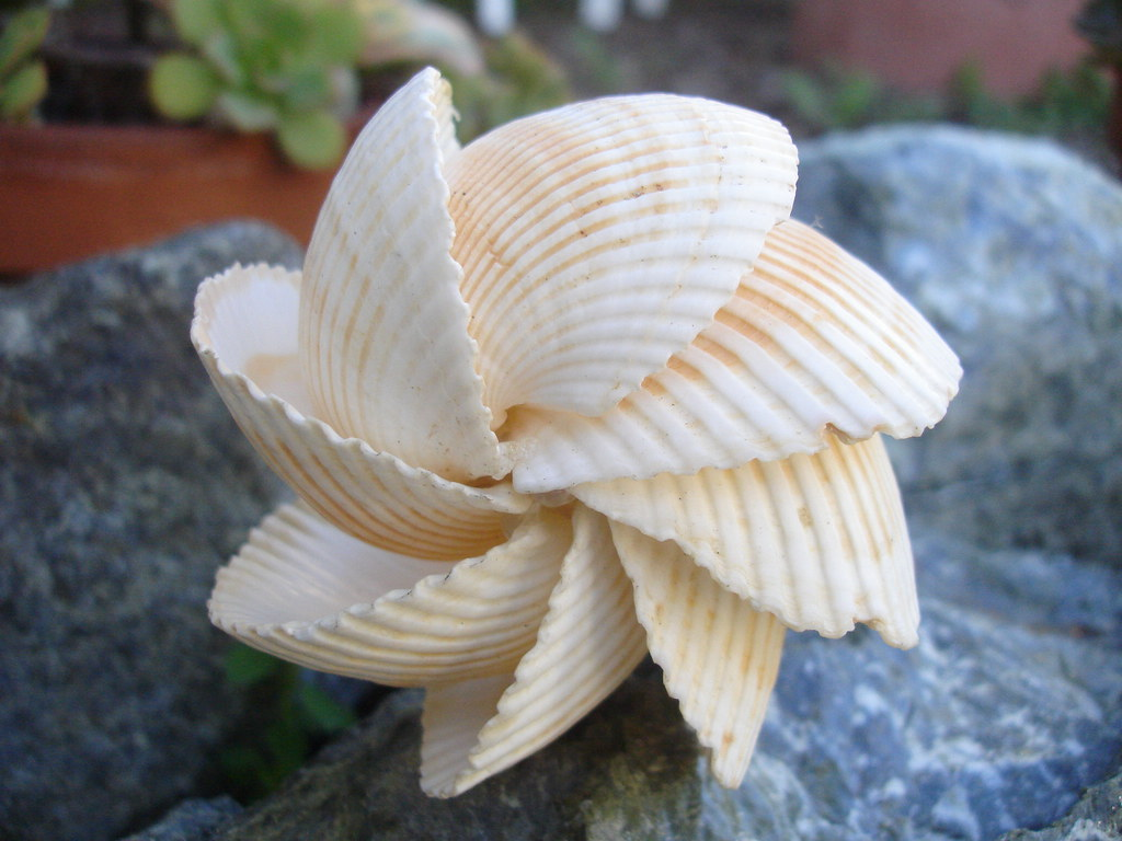 Mexican arc seashell sculpture mexican arc seashells for Michaels arts and crafts jobs application form