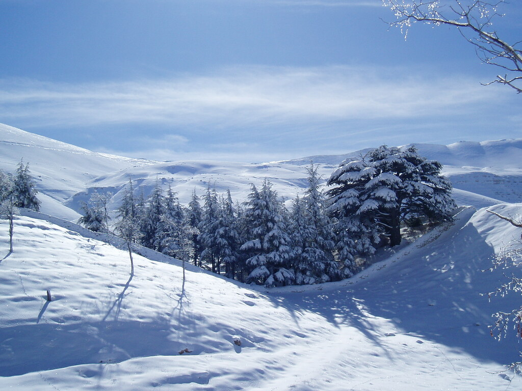 Cedar Snow Lebanon Bcharre Lebanon Leandroid Flickr
