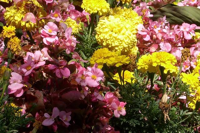 parterre de fleurs flickr photo sharing. Black Bedroom Furniture Sets. Home Design Ideas
