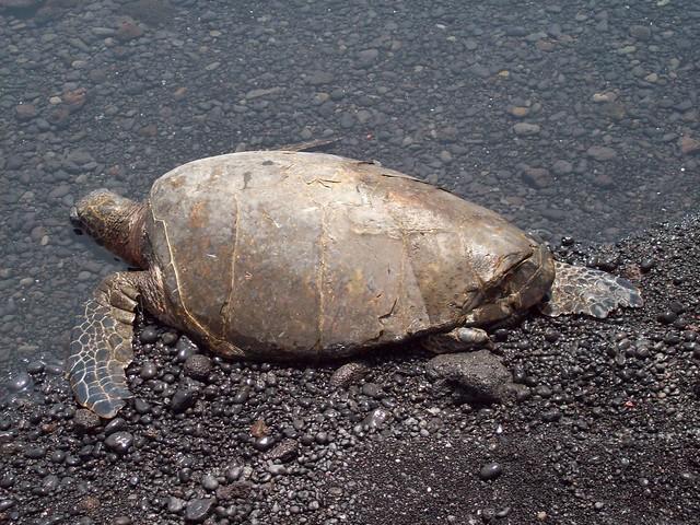 Sands Turtle Beach Resort