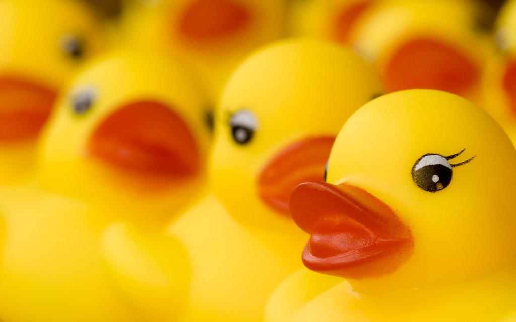 rubber duck wallpaper - photo #28