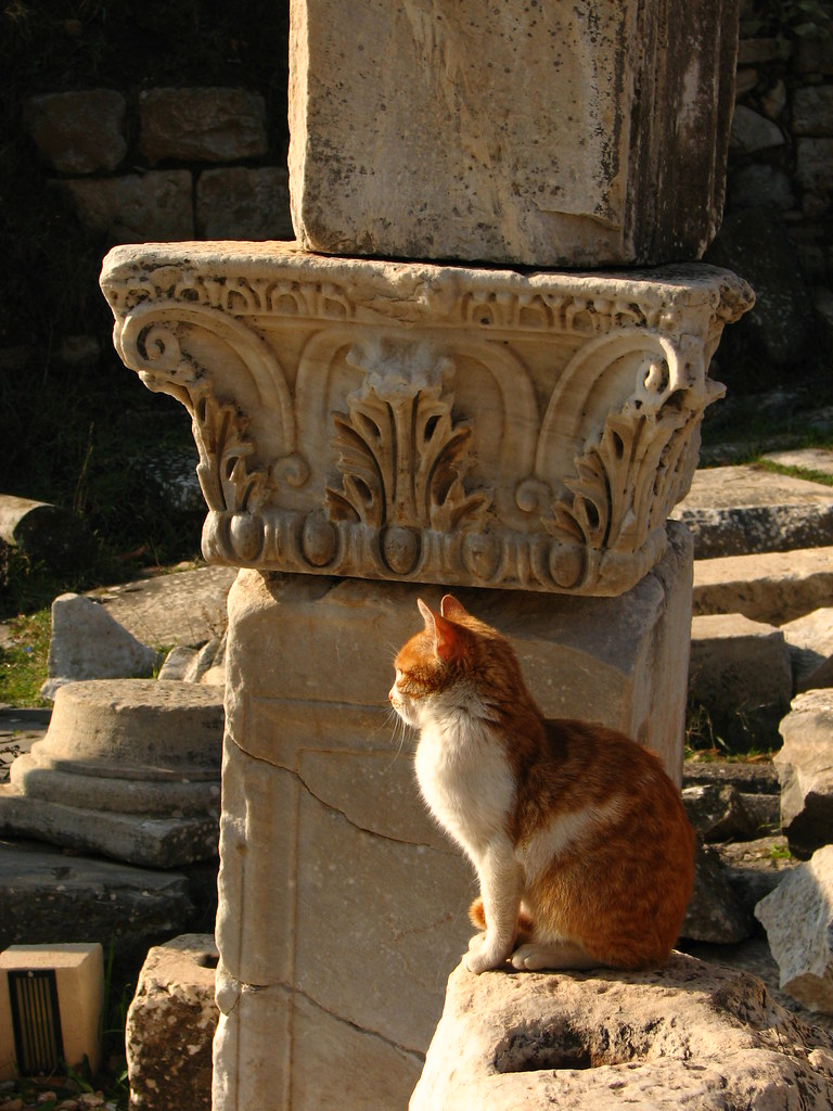 Cat Among The Ruins Of Ephesus Studiokumar Com Copyright