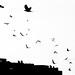 Flügel - Wings - Siivet