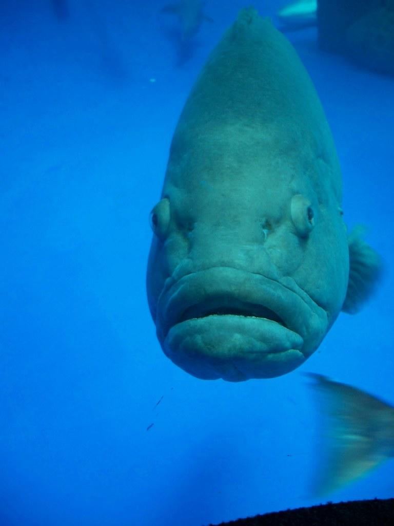 Big Fish.Com