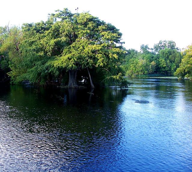 comal river landa park new braunfels tx flickr photo sharing