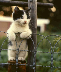 Cat on a wire fence | by Dreek Leeds