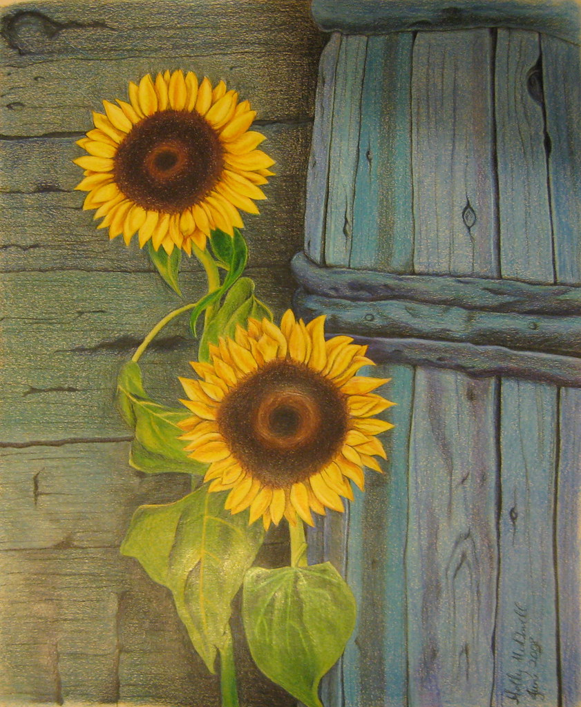 My Sunflowers Drawing | hollailama | Flickr