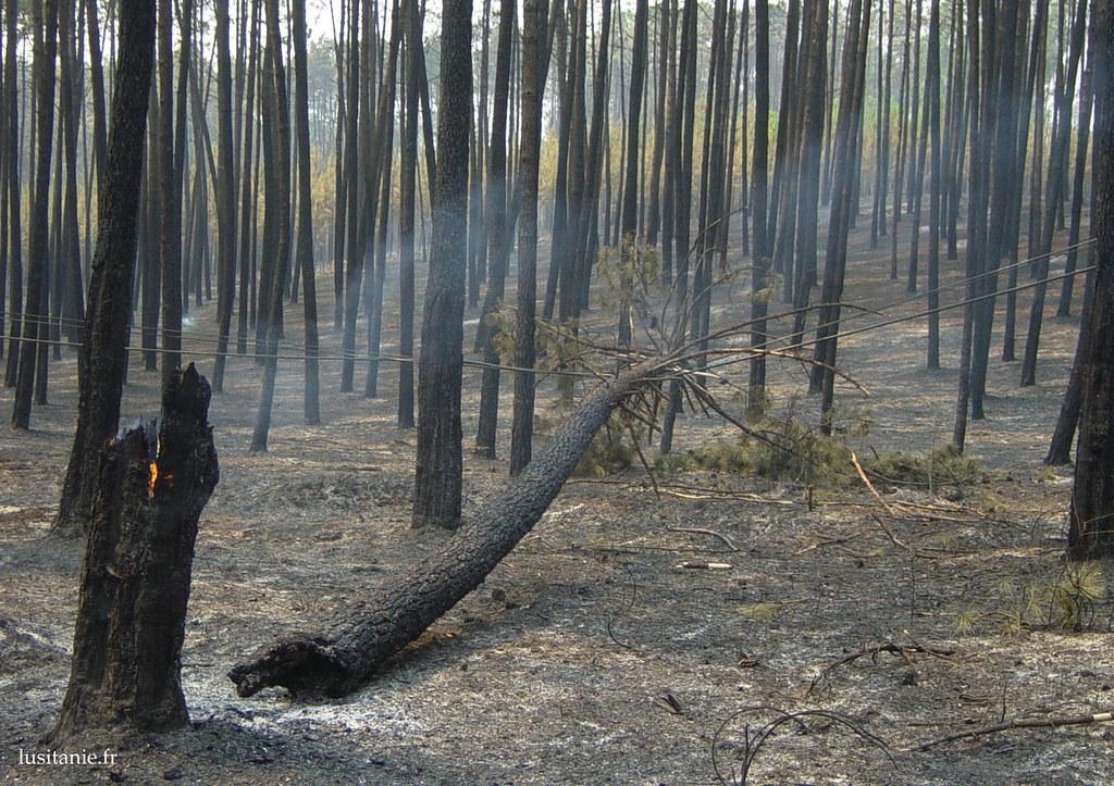 Les arbres qui tombent détruisent les installations électriques