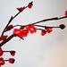 Crochet flowers - Plum Blossom(red)