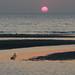 A seal at rest on a sandbank