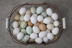 eggs of many colors | by woodleywonderworks