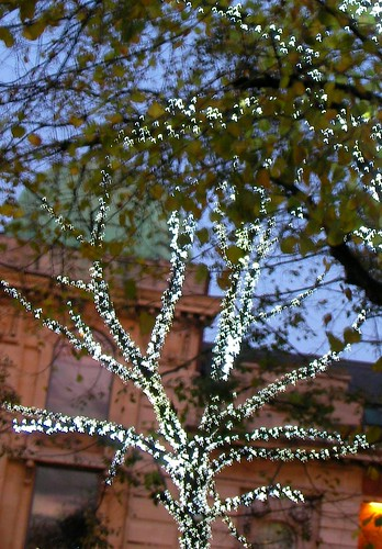 Stary branches | by londonpadmayogini