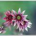 juneflower13