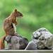 Do squirrels know yoga?