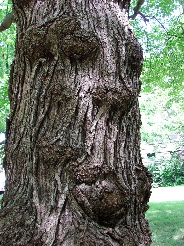 The Tree That Looks Like A Man Dedicated To Skip The