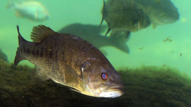 2008 07 25 athens tx freshwater fish hatchery 2915 for Fish hatchery texas