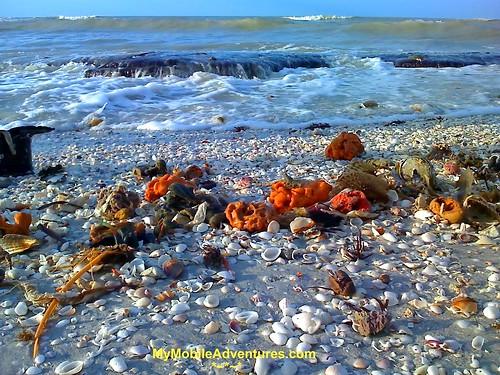Hunting Island Beach Tides