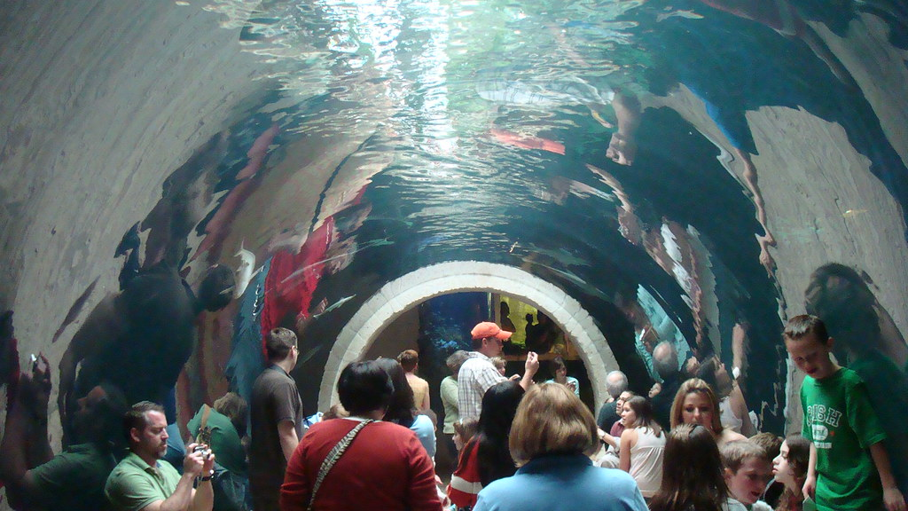 Shark Tunnel Dallas World Aquarium Gambinotoo Flickr