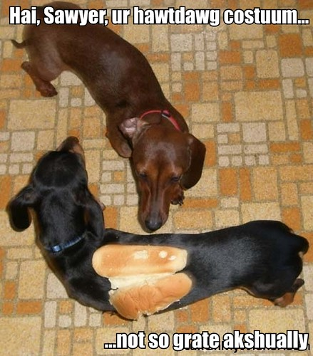 2750000302 on weiner dog in a bun