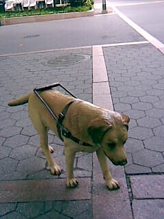Fake Service Dog Vests Explosive Dog