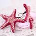 Pink starfish earrings
