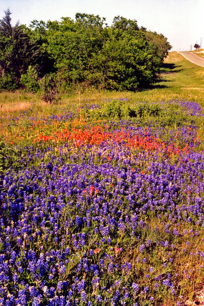 Paint Brush Road Lakeside Tx