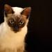 The Feline Thinker