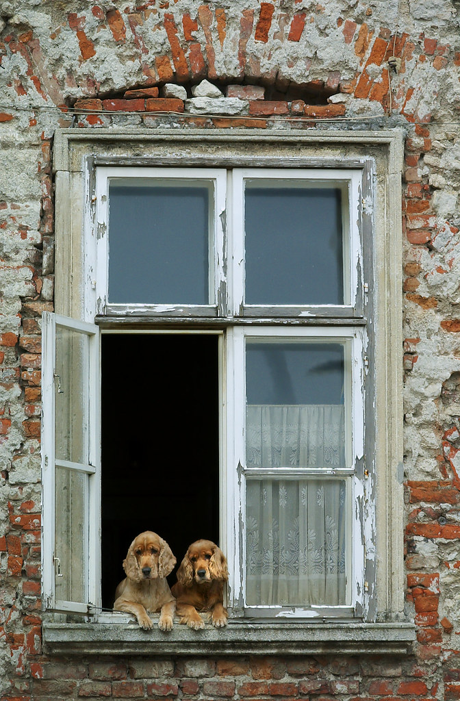 Dogs in window in Hungary