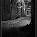 Pike Street Alley in Seattle