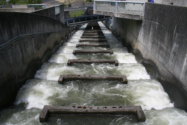 Fish ladder bonneville dam flickr photo sharing for Bonneville dam fish camera