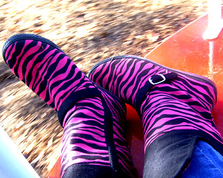 Zebra Print Rocks My Socks | by caitlin marie♥