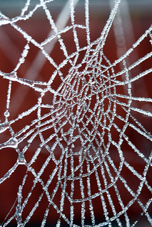 Frozen Web | by Nikki-ann